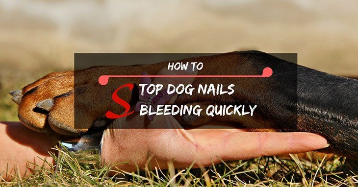 how to stop dog nails bleeding quickly