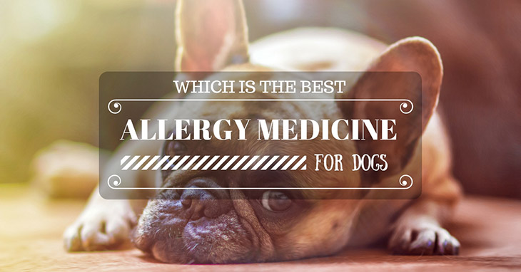 Help you choose the best allergy medicine for dogs