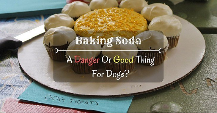 is baking soda bad for dogs