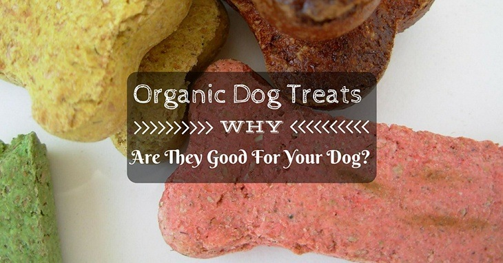 why are organic dog treats good for your dog