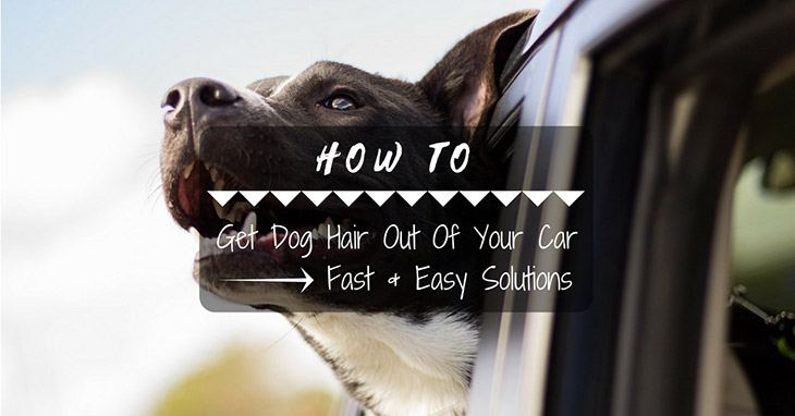 fast and easy solutions how to get dog hair out of your car