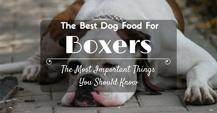 the most important things you should know about the best dog food for boxers