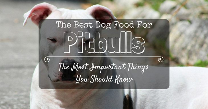 the most important things you should know about the best dog food for pitbulls