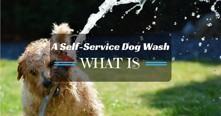 what should we know about self-service dog wash