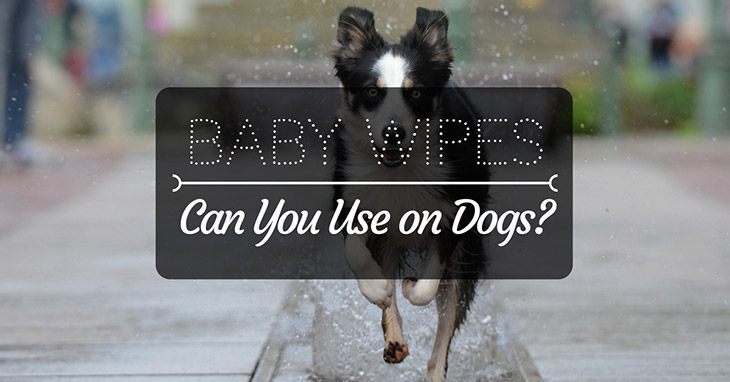 Can You Use Baby Wipes on Dogs?