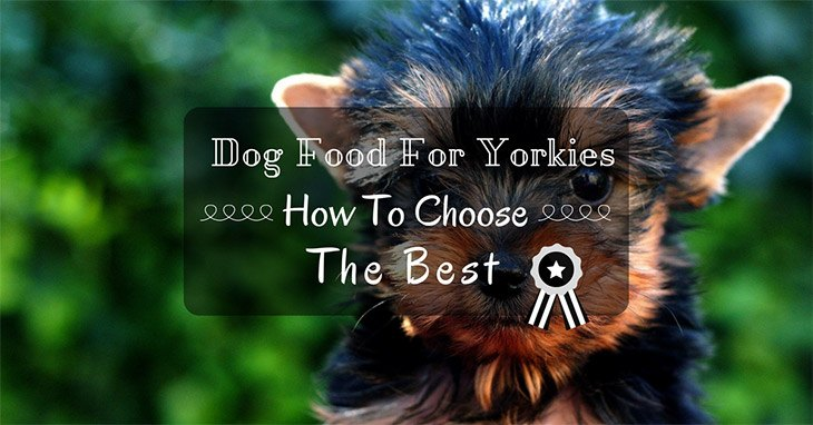 how to choose the best dog food for yorkies