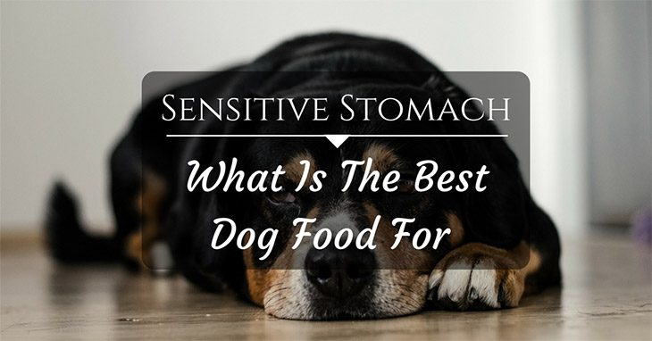 what is the best dog food for sensitive stomach