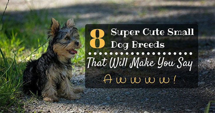 top 8 cutest popular small dog breeds