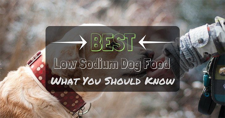what you should know about low sodium dog food