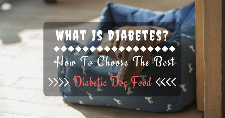 what is diabetes? How to choose the best diabetic dog food