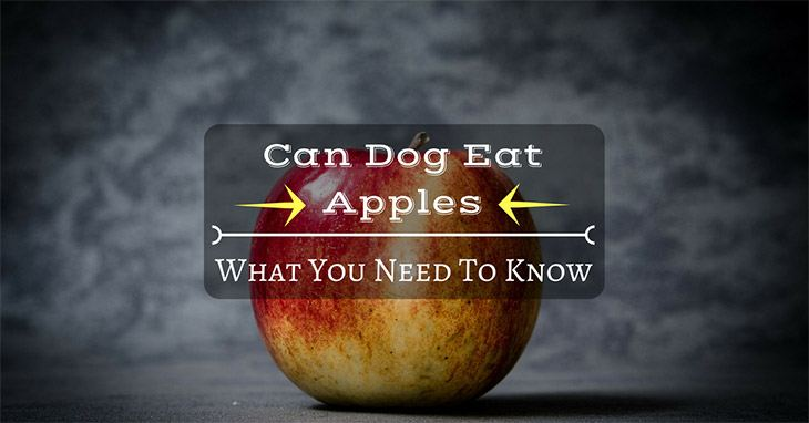 fact check: can dog eat apples?