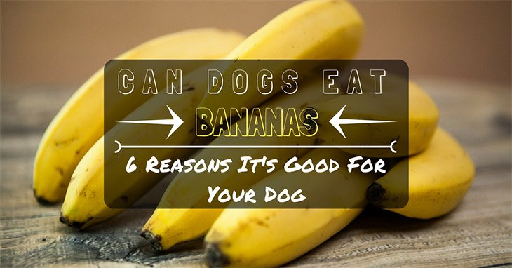 Here are some reasons why feeding bananas to dogs is okay