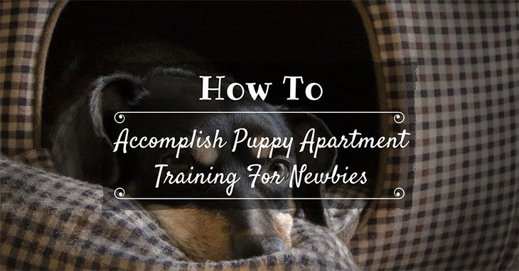 How To Accomplish Puppy Apartment Training For Newbies