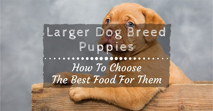 How To Choose The Best Large Breed Puppy Food For Your Dog