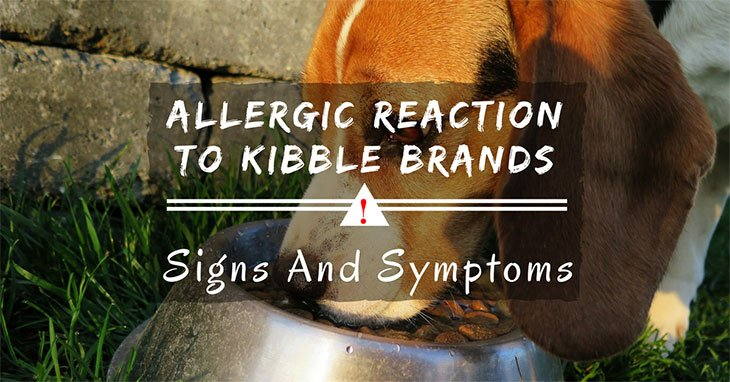 Allergic Reaction vs Kibble Brands