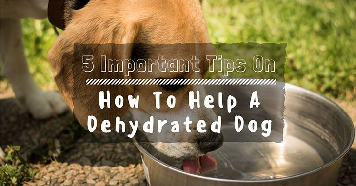 How to help a dehydrated dog