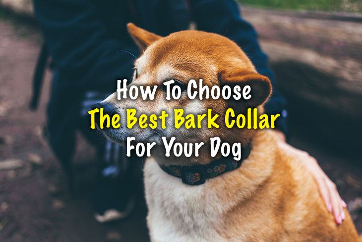 how to choose best bark collar