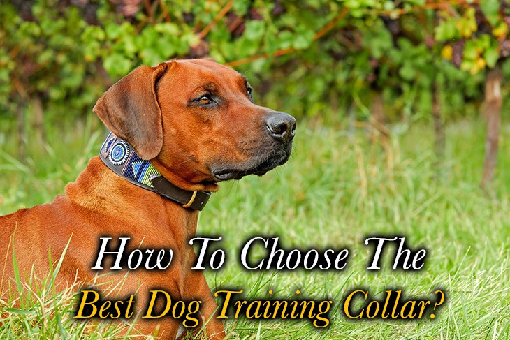how to choose best dog training collar for your dog?