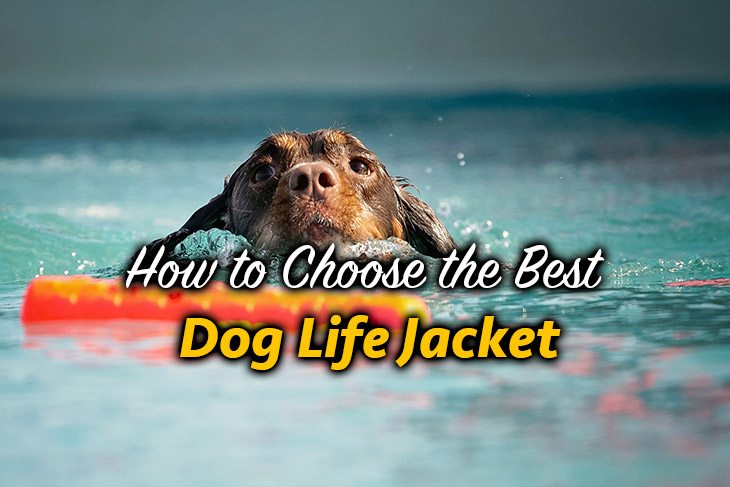 we will discuss some of the best dog life jackets