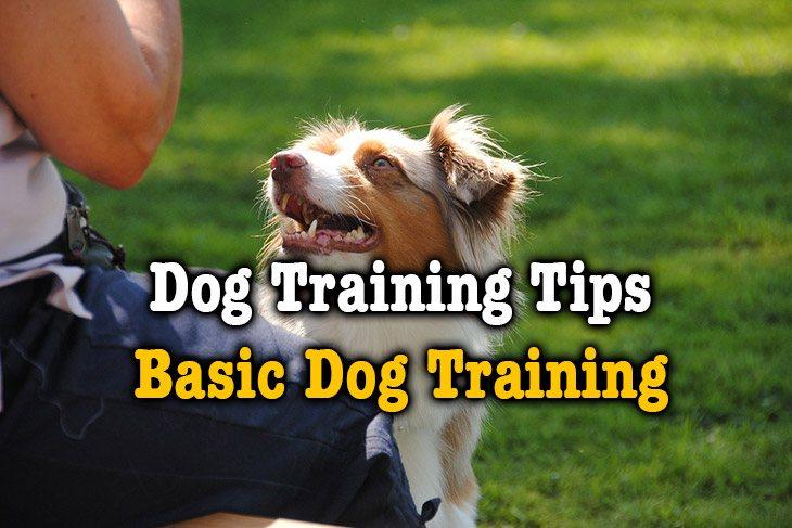 dog training tips-basic dog training