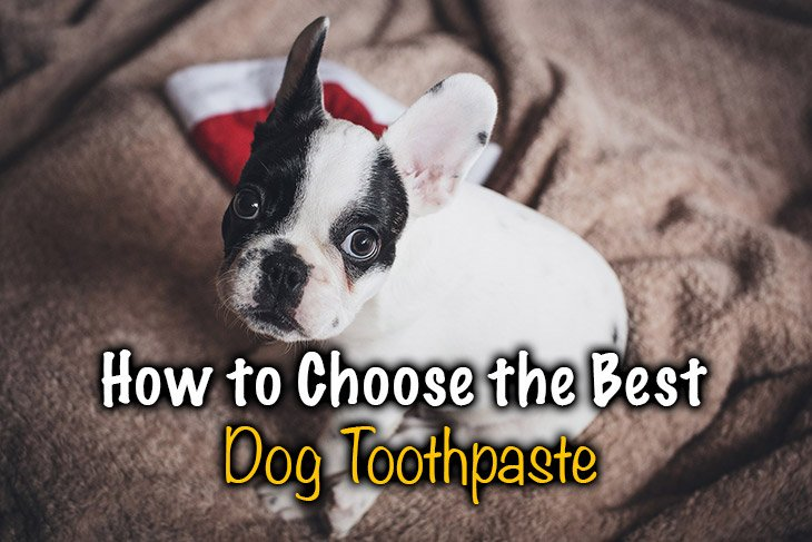 best dog toothpaste. Did you know how to choose the right?