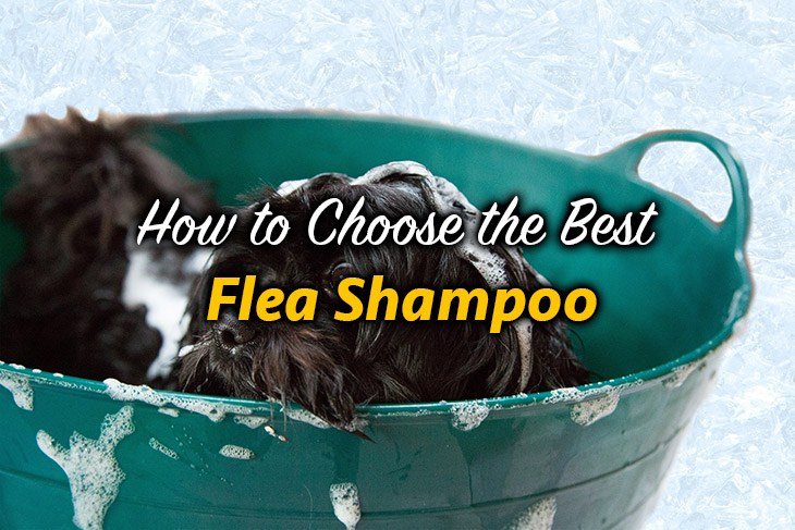 How to Choose the Best Flea Shampoo for Dogs