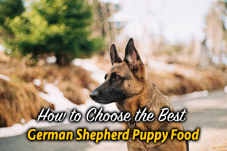 do you know how to choose food for Germand Shepherd breed?