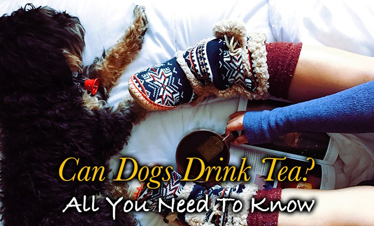 Yes, your dog can have tea