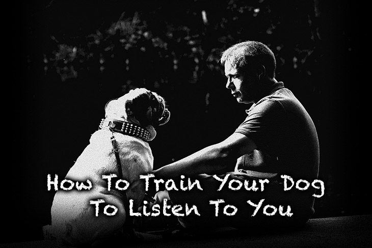 how to train your dog to listen to you