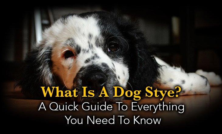 what you should know about a dog stye