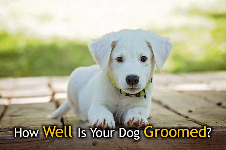 is your dog groomed right?