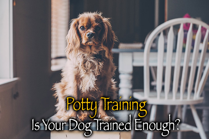 is your dog potty trained enough?
