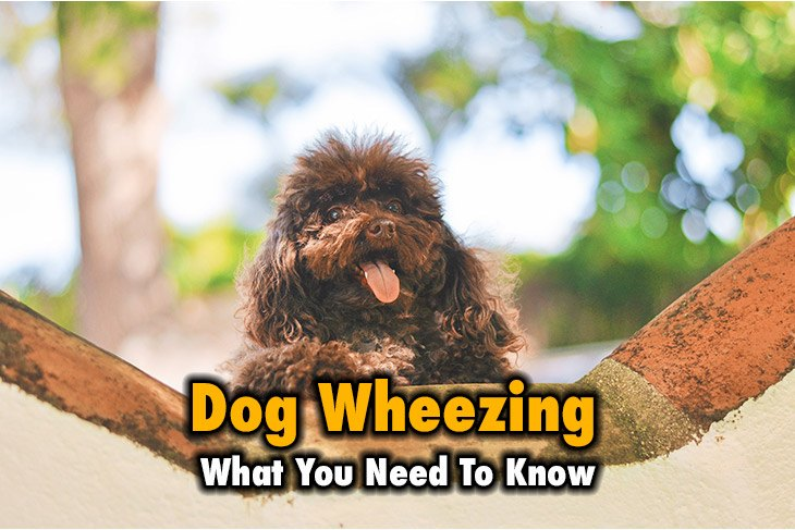 What You Need To Know About Dog Wheezing