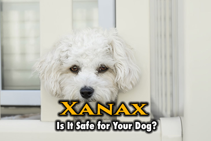 xanax for dogs. Is it safe for your dog?