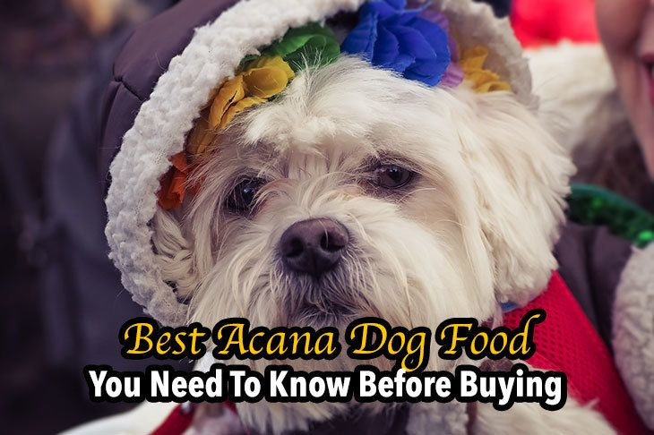 best acana dog food you need to know before buying