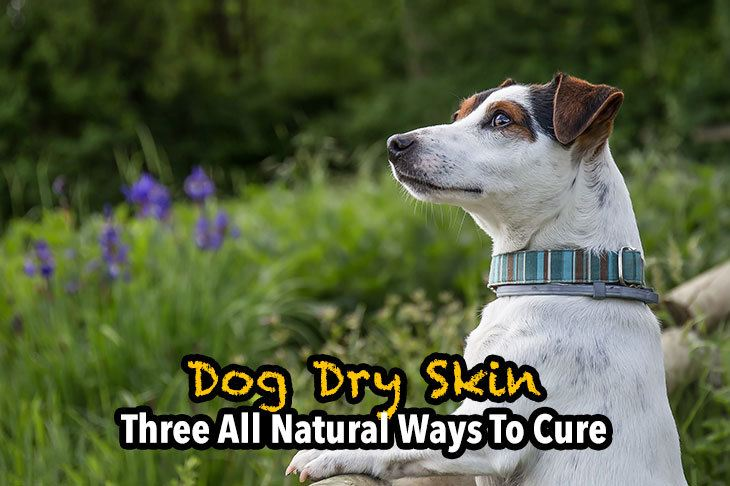 three all natural ways to cure dog dry skin