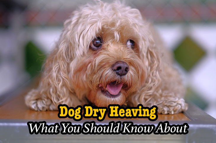is your dog dry heaving?