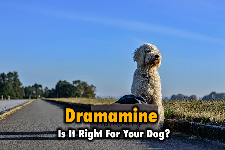How do you know if dramamine is right for your dog?