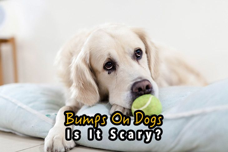 bumps on dogs. Is it scary?