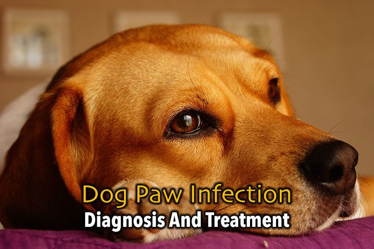 what should you know about dog paw infection