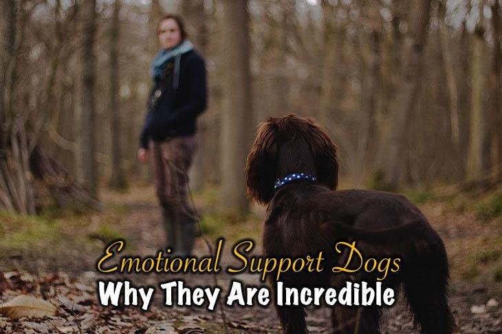 Why Emotional Support Dogs Are Incredible