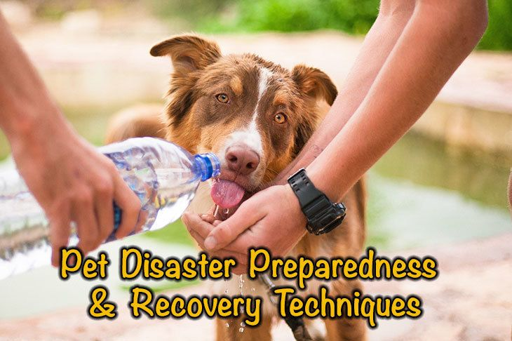 What You Need To Know About Pet Disaster Preparedness & Recovery Techniques
