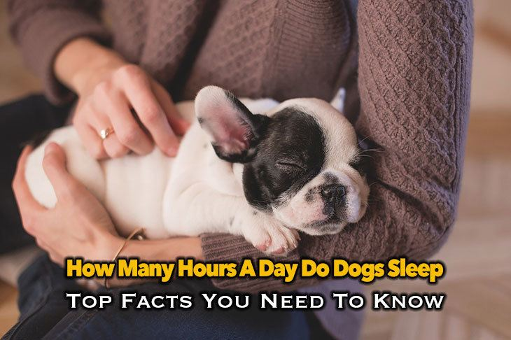 How Many Hours A Day Do Dogs Sleep