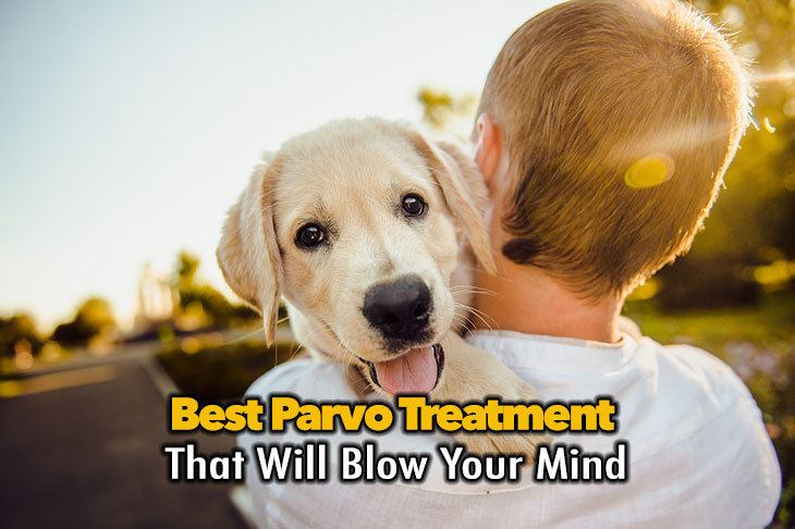 The Best Parvo Treatment At Home That Will Blow Your Mind