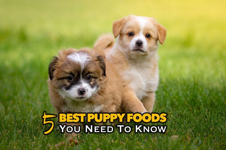 Reviews Of The 5 Best Puppy Food Brands You Need To Know