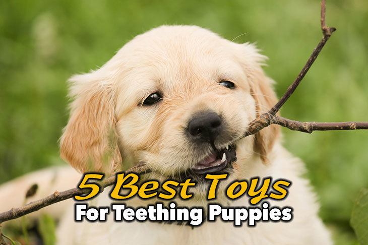 5 Best Toys For Teething Puppies You Need To Know
