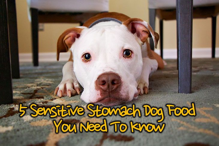 Reviews Of The 5 Best Sensitive Stomach Dog Food You Need To Know