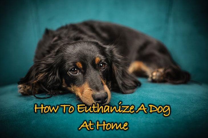 Euthanize A Dog