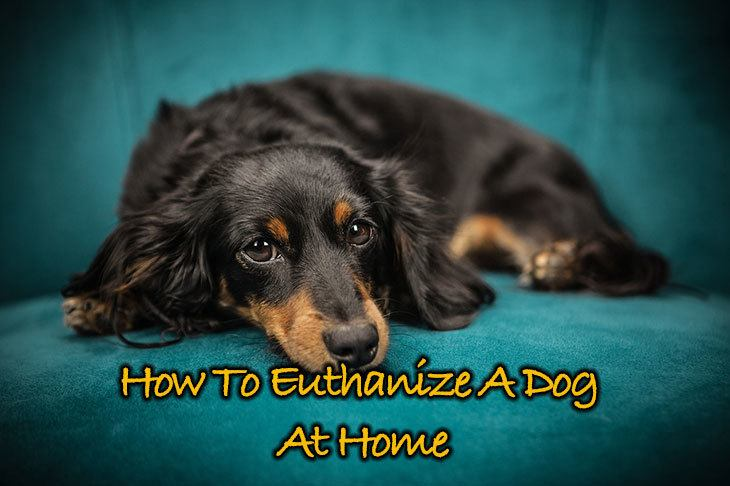 Tips on how to euthanize a dog at home that will blow your mind solutioingenieria Images
