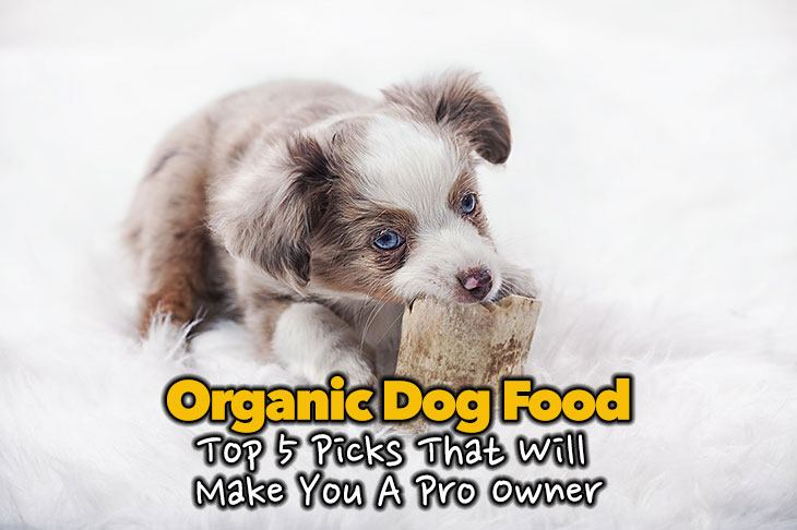 Organic Dog Food – Top 5 Picks That Will Make You A Pro Owner